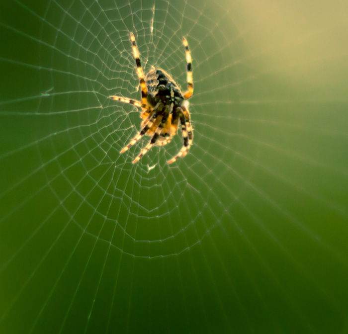 Spider in the Window